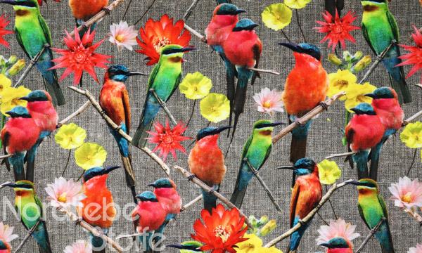 Canvas ~ Vögel